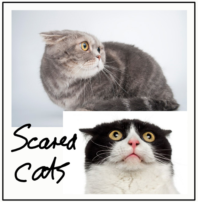 What are cats scared of?