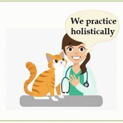 Veterinarian provides cat behavior classes