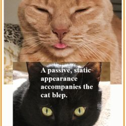 Why do cats blep?