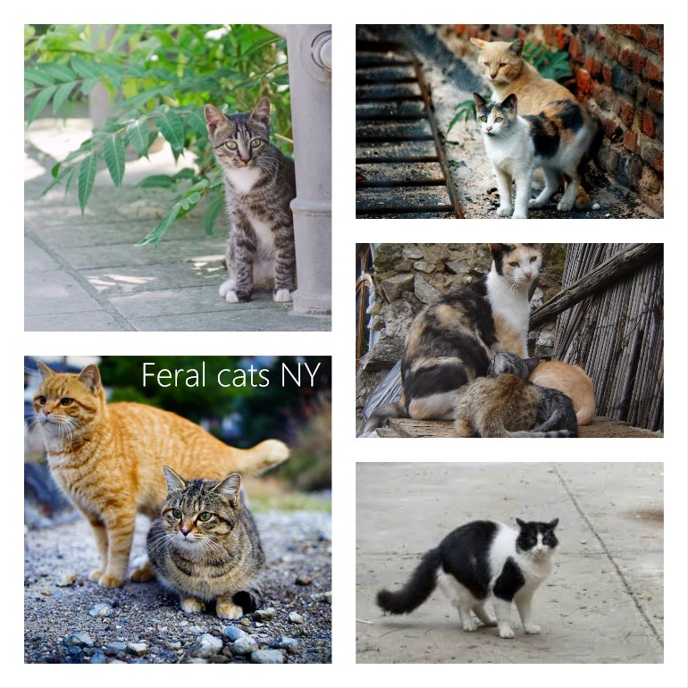 Is it legal to shoot feral cats in NY?