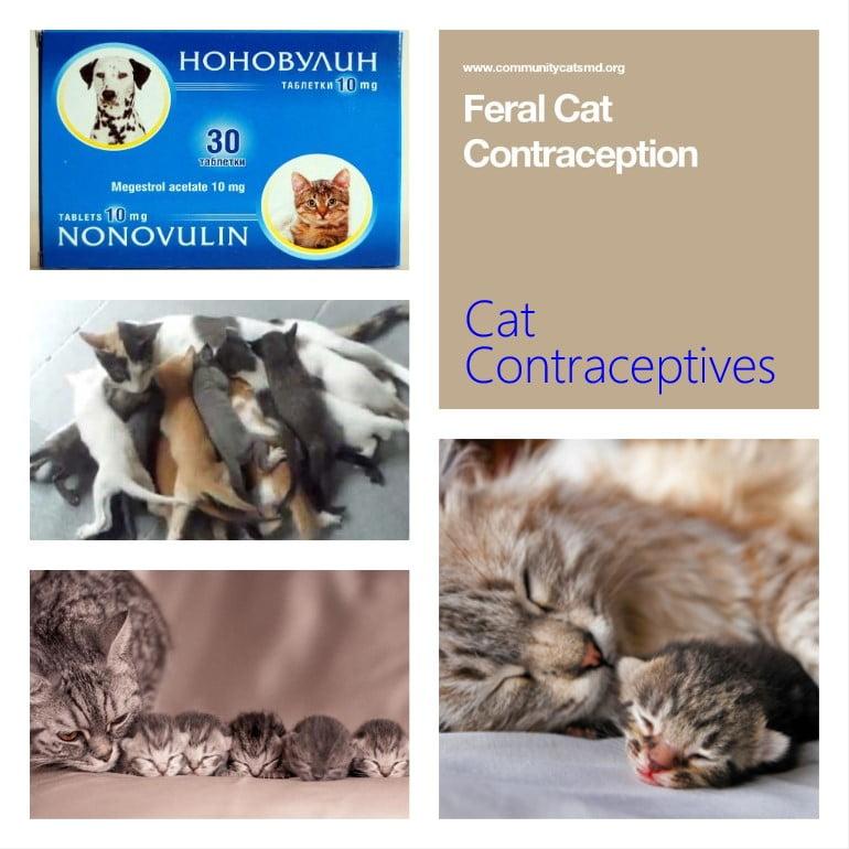 Cat Contraceptive