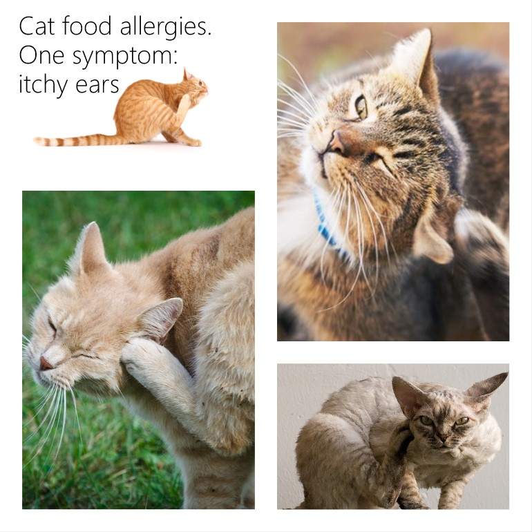 Cat food allergies: two places where the symptoms show up