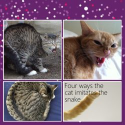 Here is 4 ways domestic cats imitate snakes
