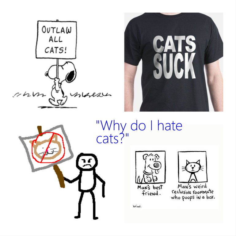 Why do I hate cats?