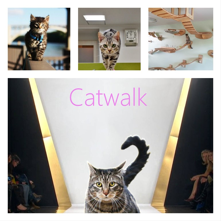 Origin of word catwalk