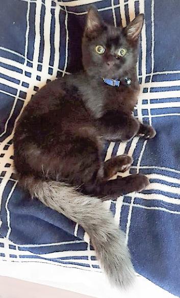 Squirt a chimera cat with a unique coat