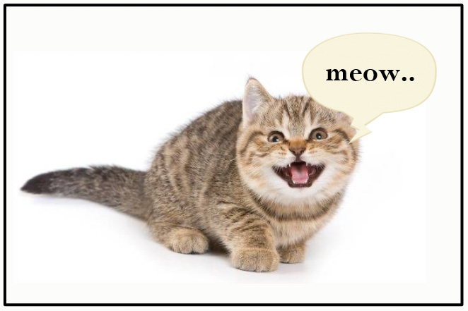 What is your cat saying? Your cat's seven basic messages