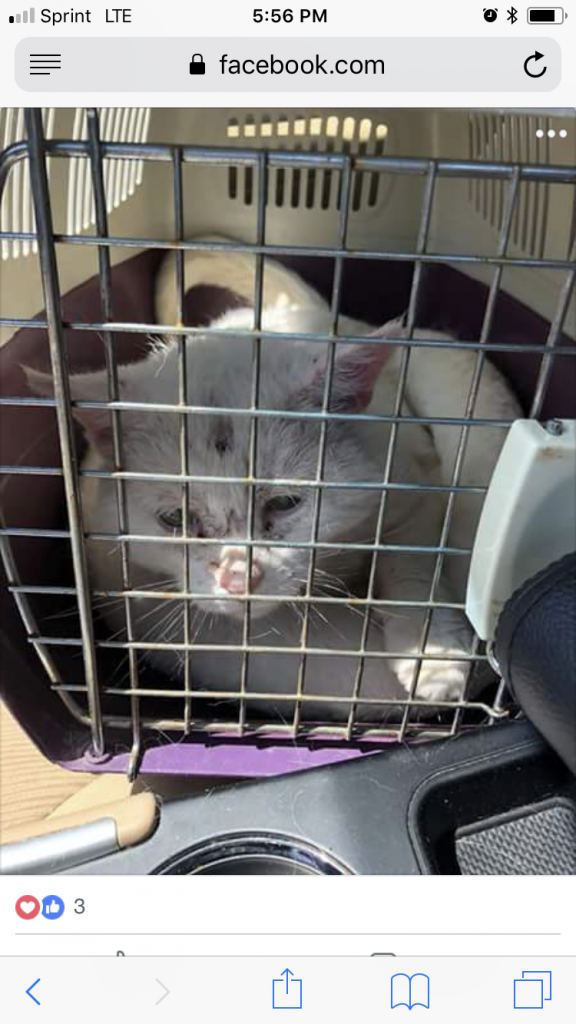 Hercules in his carrier. Freedom Ride