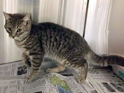 Cabarrus County Animal Shelter Cats