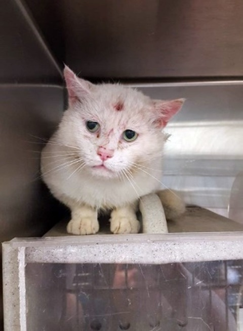 The face of heartbreak: Cat at NC shelter may only have a few days