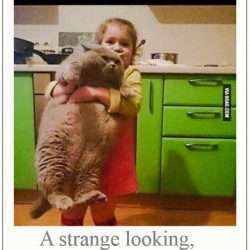 Strange looking adorable grey cat