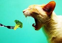 Vegetarian Cats