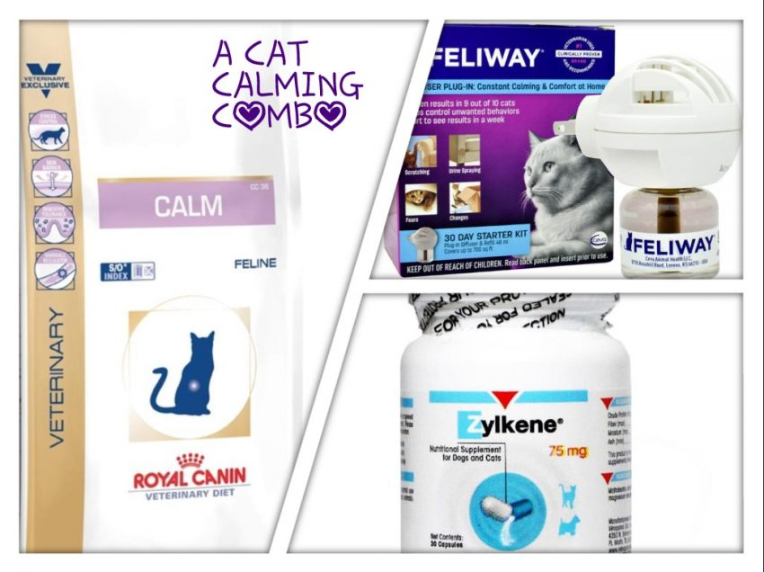 Calming your cat: Combining 3 products