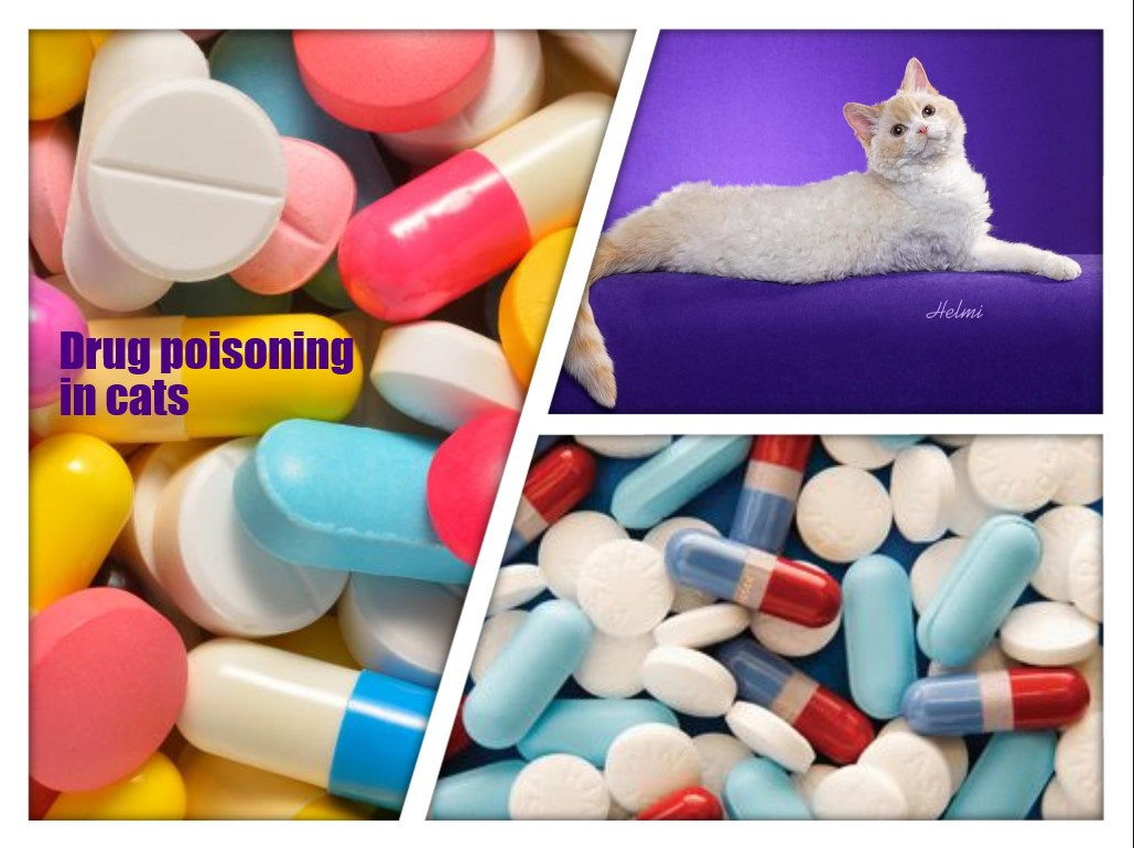 Drug Poisoning in Cats