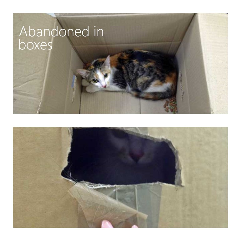 Is abandoning a cat illegal?