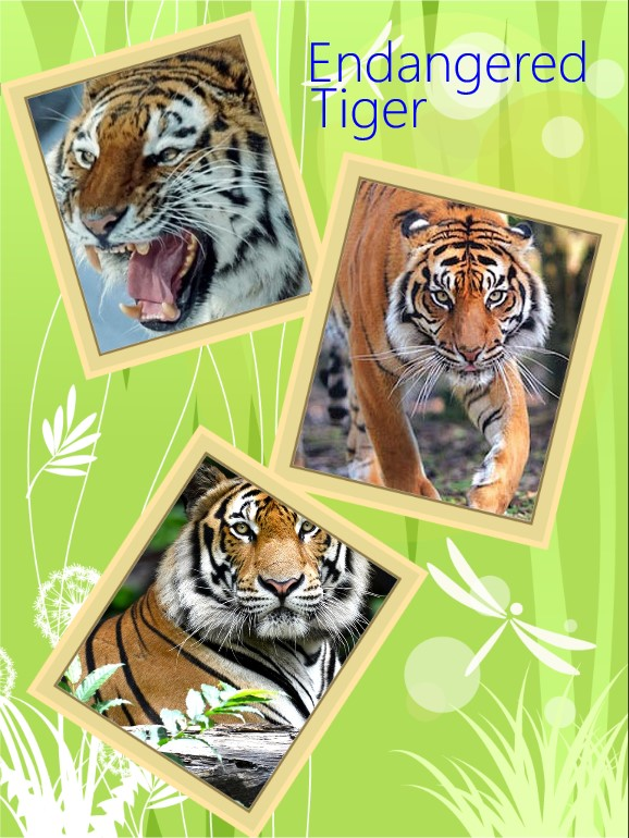 5 reasons why the tiger is endangered
