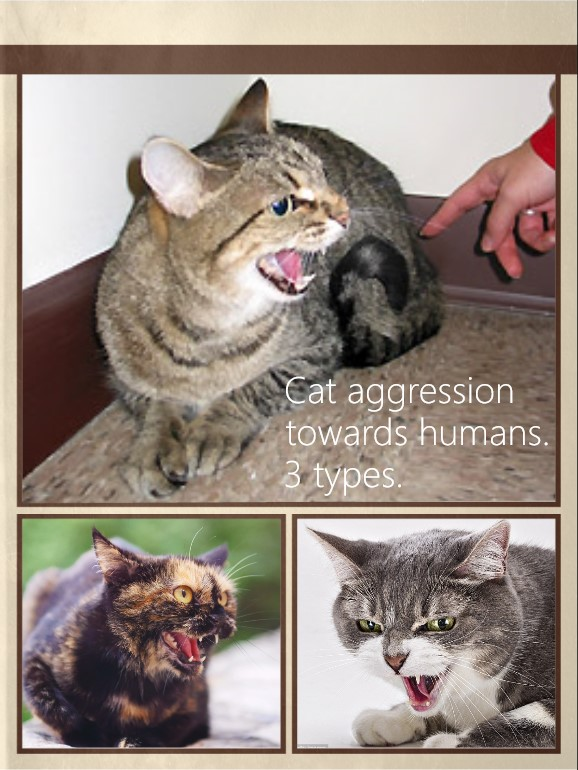Cat aggression towards humans. 3 types.