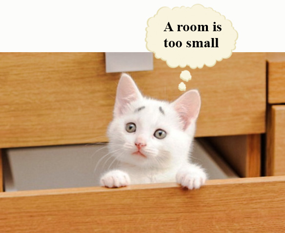 Is it cruel to keep a cat in one room?