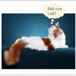 How do cats learn their name?