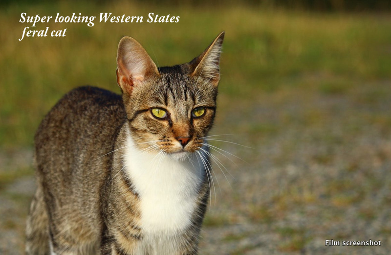 The Western Governors Association declares the feral cat an invasive species