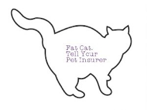 Fat cat may not be insured