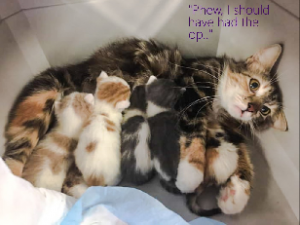 Mamma cat and kittens. The look on her face.