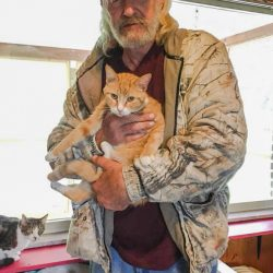 Shelter Euthanizes 42 Cats in One Day