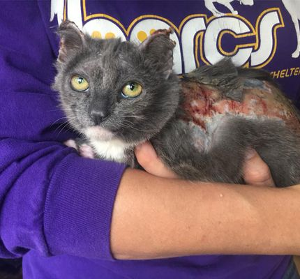 Poppy a badly burned 8 week old cat