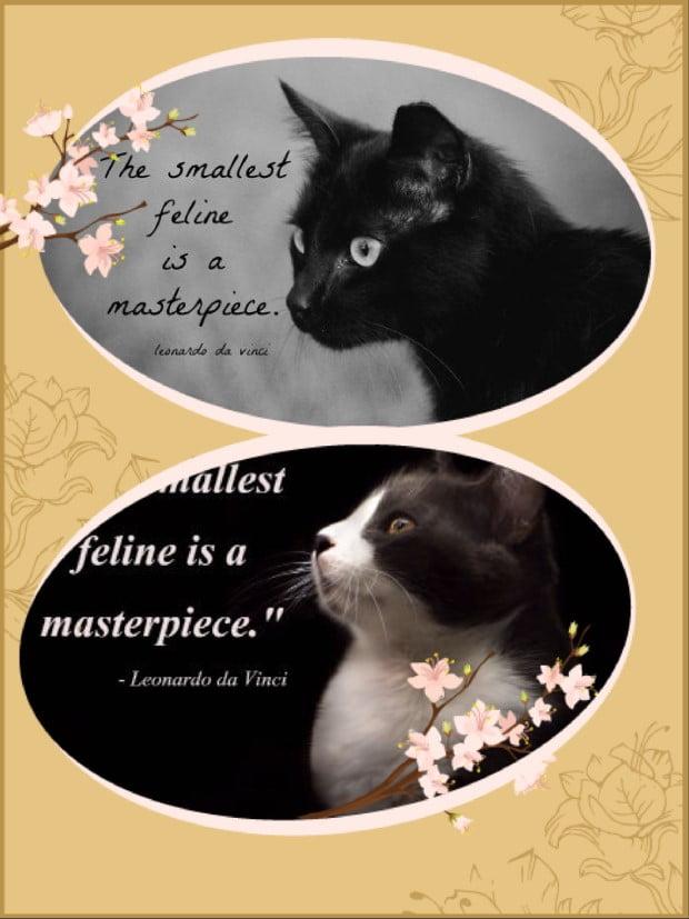 Respecting the cat: 7 ways