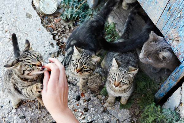 If you feed a stray cat is it legally yours?