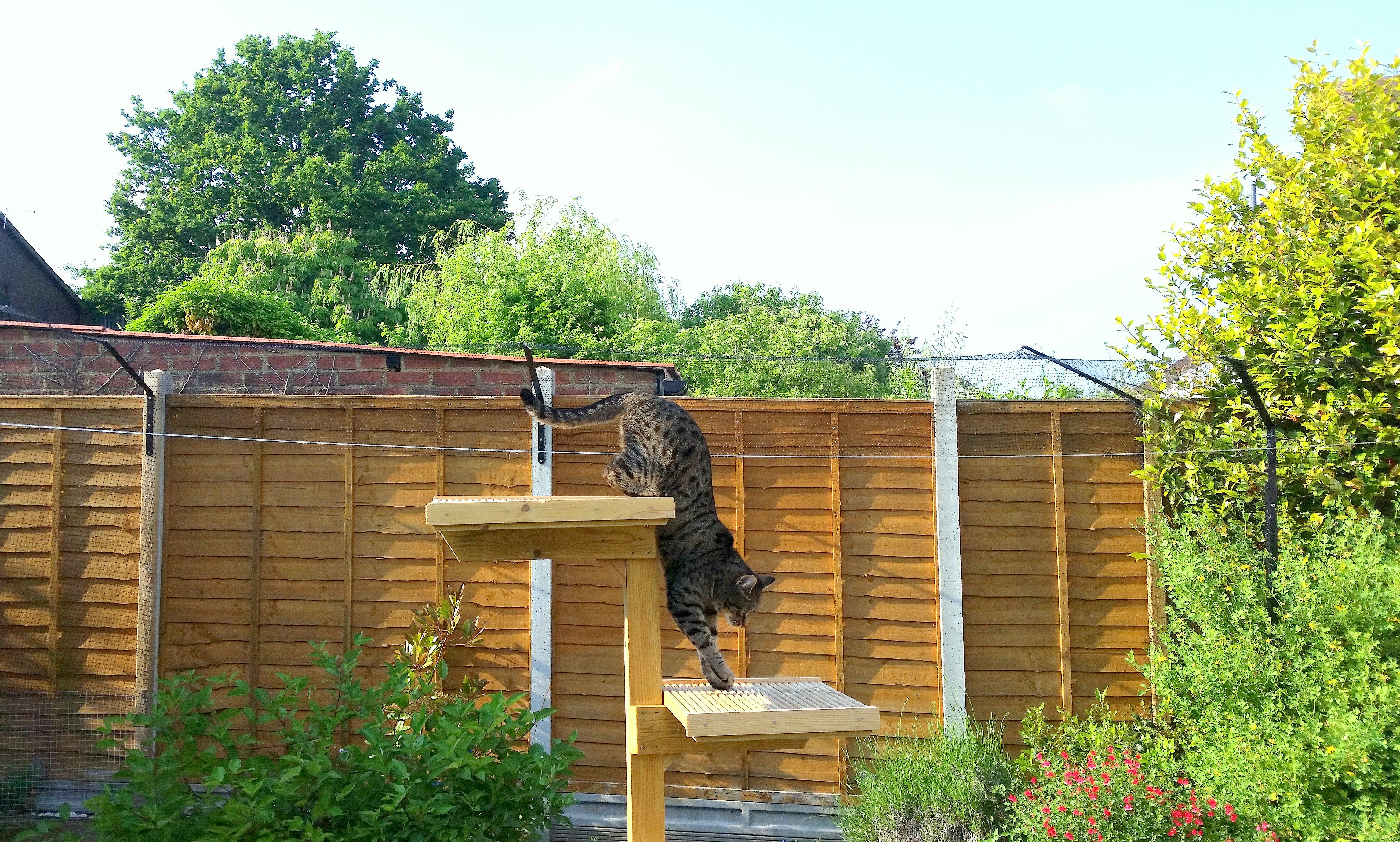 My cat enjoying his outside cat enclosure