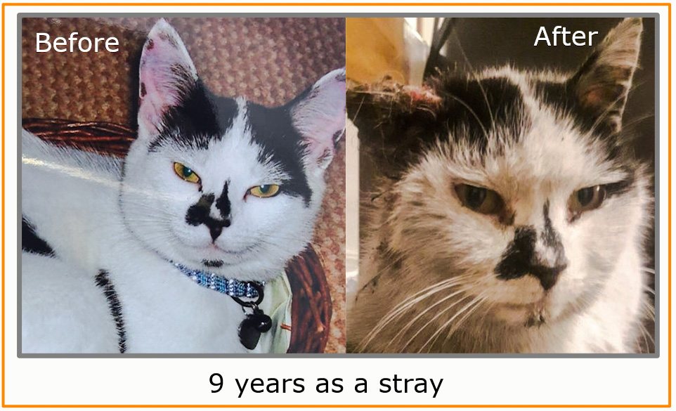 Nine years as a stray cat. Before and after photographs