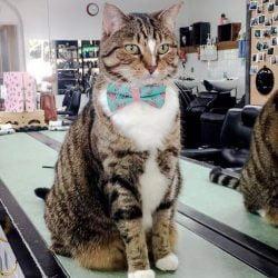 Betty Boo Hair Salon cat is a cutie