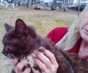 Black rescued cat with bad eye