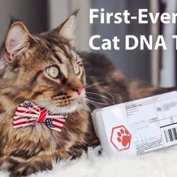DNA Testing of Cats