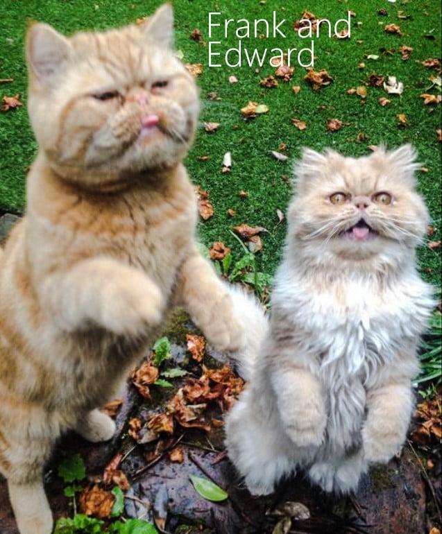 Ella Eyre's Cats