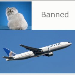 Persian Cats Banned by United Airlines