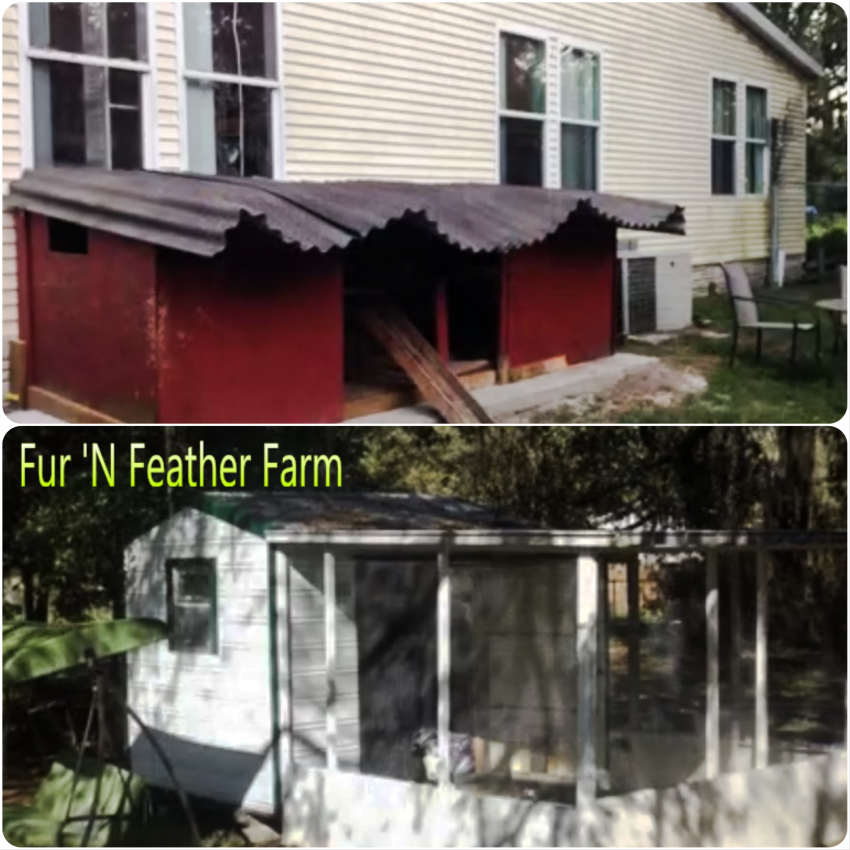 County Granted Custody of More Than 300 Cats Seized from Fur 'N Feather Farm