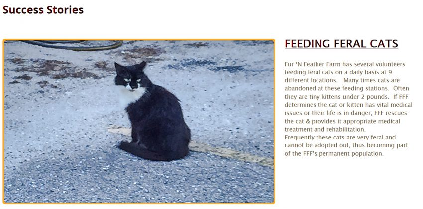Fur 'N Feather Success Story TNR
