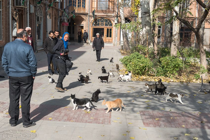 Iranians Are Having Smaller Families and Keeping More Pets