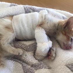 Kitten's Fierce Determination to Survive