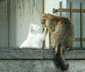 Love Actually. Two Cats.