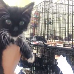 Seventy Adorable Kittens Were Found Foster Homes in Hours