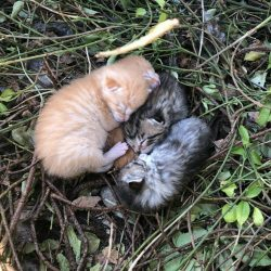 The vulnerability of kittens born outside and uncared for