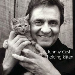 Domestic Cats Can Interpret Holding Them As Play