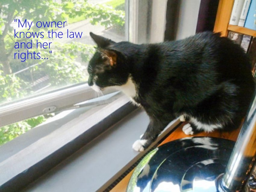 USA: Prohibited From Keeping A Cat? Check Out The Fair Housing Act and the Disabilities Act 1990