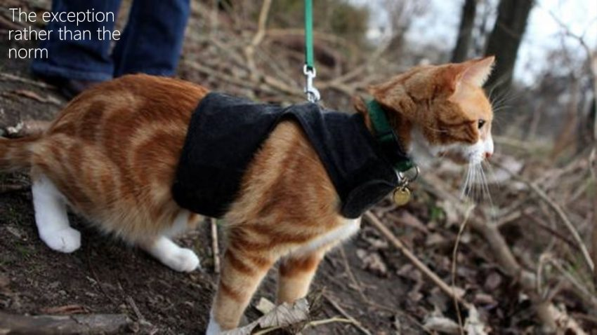 Why don't cats walk on leashes?