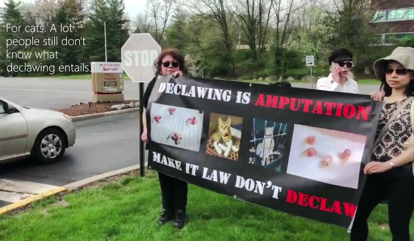 Anti-declawing Protests At Veterinary Association Conferences
