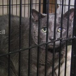 Ninety Percent Drop in the Killing of US Dogs and Cats in Shelters