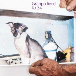 Texan Discovered The Unlikely Formula For Feline Longevity